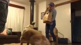 Reação Linda De Um Cachorro Ao Perceber Que Ganhou Um Irmão!