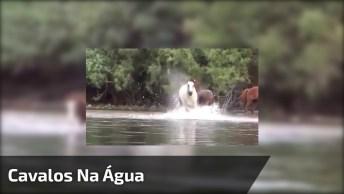 Reações De Cavalos Na Água, Isso Seria Uma Brincadeira Ou Um Relacionamento?