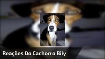 Reações Do Cachorro Bily, Faça O Teste Com Seu Cachorro Também!