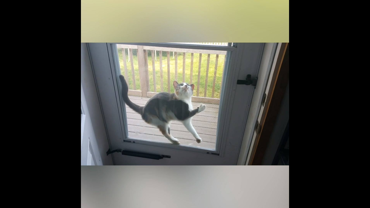 Reações dos gatos, como eles são engraçados