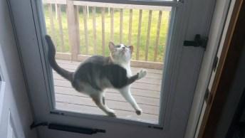 Reações Dos Gatos, Como Eles São Engraçados, Vale A Pena Conferir!