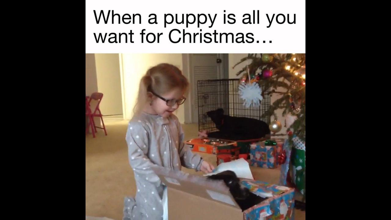 Reações emocionantes e engraçadas de crianças e adultos ganhando um cachorro!