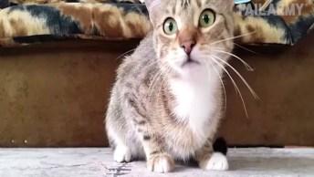 Reações Engraçadas De Gatinhos, Tem Não Rir Com Estes Animais Fofinhos!