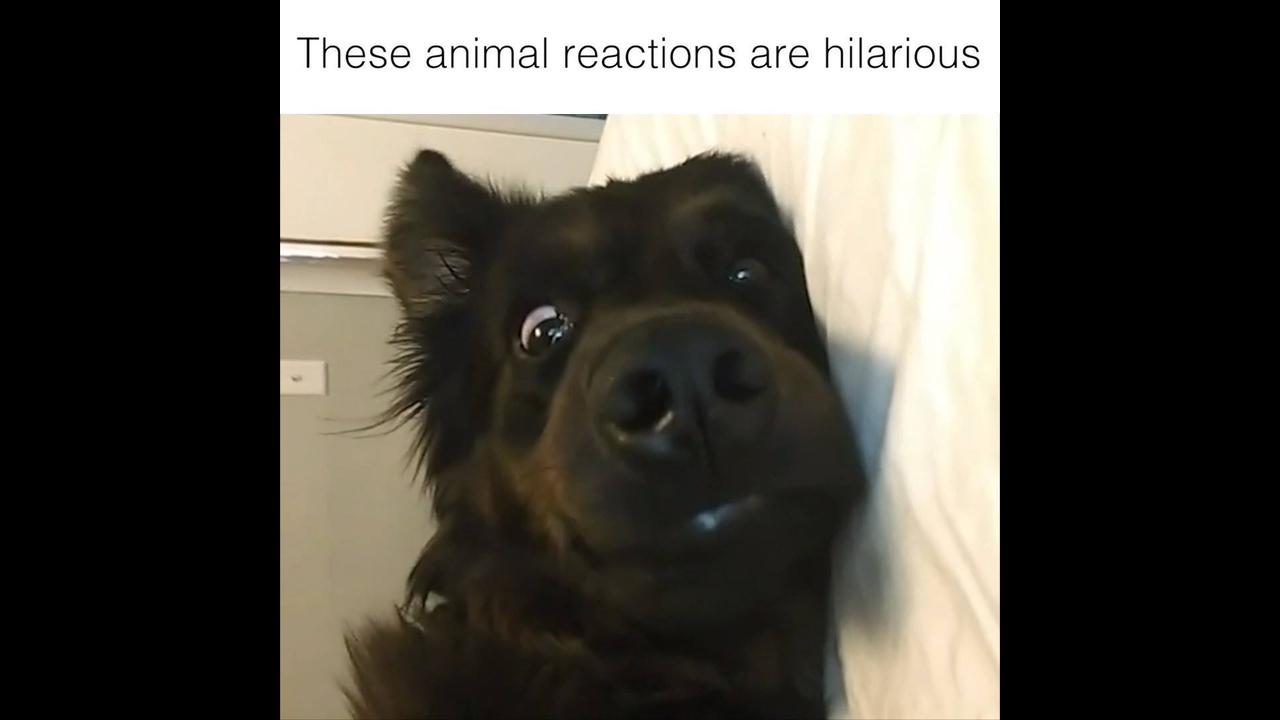 Reações mais engraçadinhas de animais de estimação