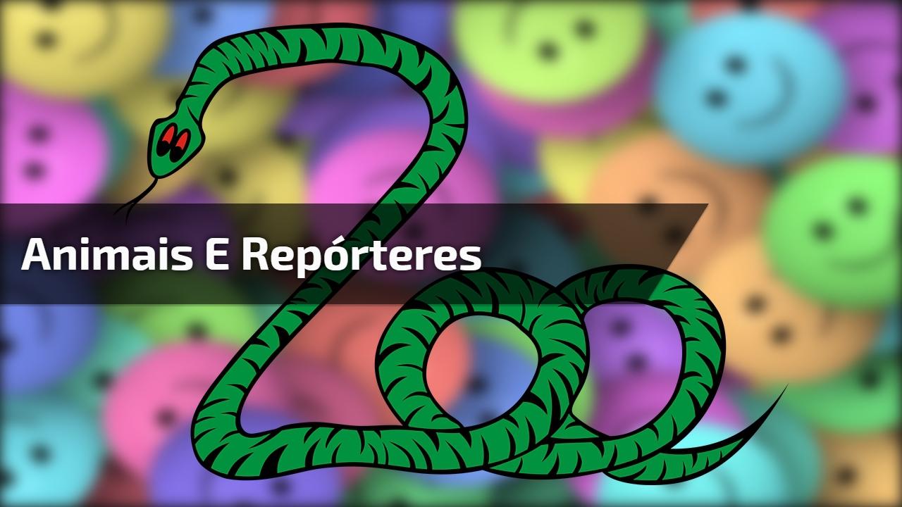 Animais e repórteres