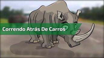 Rinoceronte Correndo Atrás De Carros, É Melhor Sair Da Frente Hahaha!