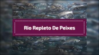 Rio Repleto De Peixes, As Pessoas Nem Conseguem Sair De Lá, Confira!