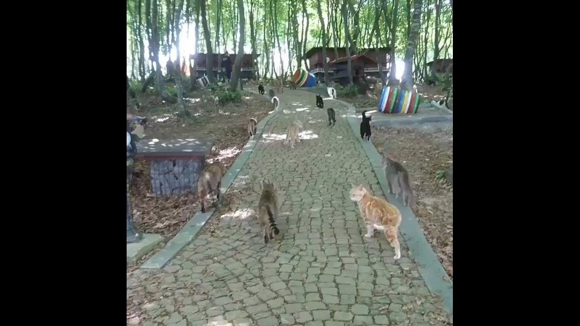 Santuário de gatinhos, olha só a quantidade de animal