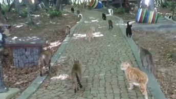 Santuário De Gatinhos, Olha Só A Quantidade De Animal, É Muita Fofura!
