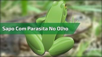 Sapo Com Parasita No Olho, Dá Uma Agonia E Um Dó Desse Animal!