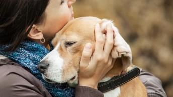 Se O Seu Cachorro Pudesse Falar, Veja O Que Ele Diria A Você!