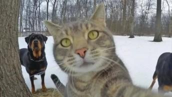 Se Você Pensa Que É O Rei Da Selfie, É Por Que Ainda Não Conheceu Esse Gato!