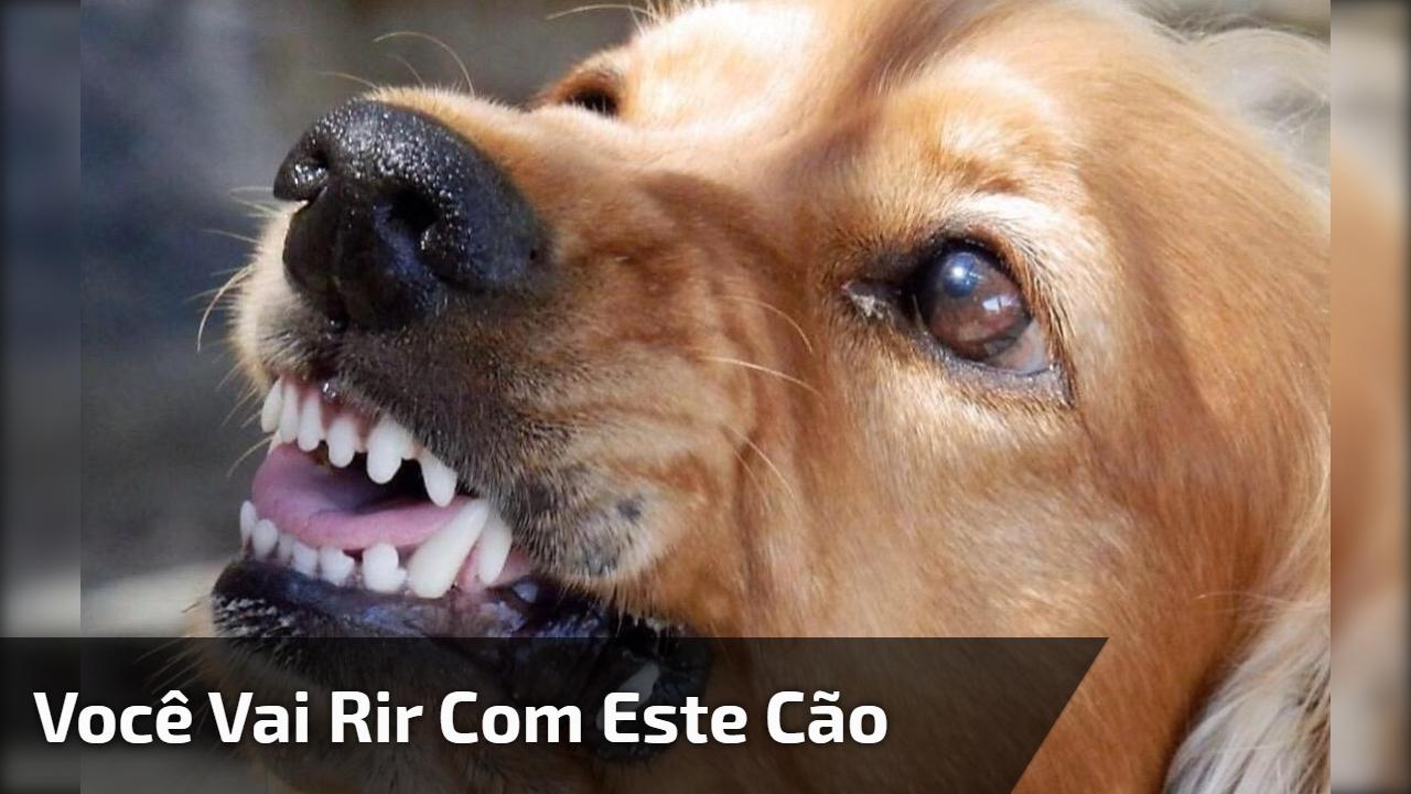 Você vai rir com este cão