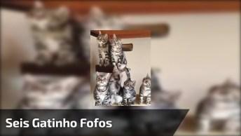Seis Gatinho Fofos Juntos, É Muita Fofura Em Um Vídeo Tão Pequeno!