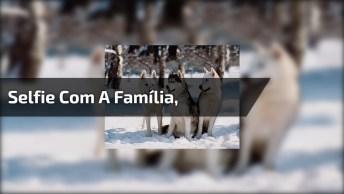 Selfie Com A Família, Olha Só Que Coisa Mais Linda Estes Cães!