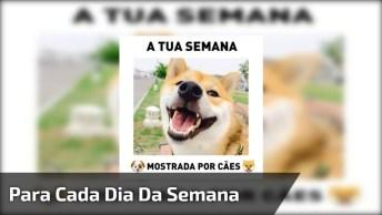 Semana Demonstrada Pelos Cães, Com Certeza Você Vai Se Identificar!
