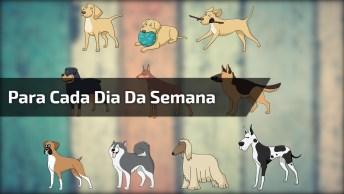 Semana Representada Pelos Cachorros, Veja Se Você Concorda!