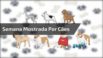Semana Representada Por Cachorros - Você Gostou Da Representação?