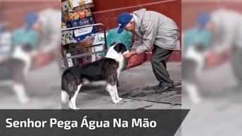 Senhor Pega Água Na Mão E Leva Para Cachorro Beber, Que Cena Mais Linda!