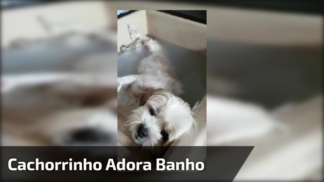 Seu cachorro dá trabalho na hora do banho? Então veja esse cachorrinho!