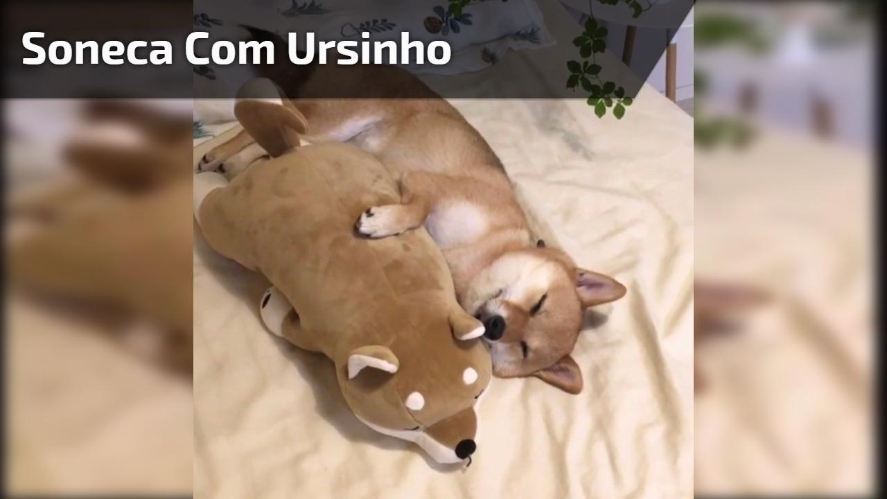 Shiba inu tirando um cochilo com seu cachorro de pelúcia, que fofura!!!