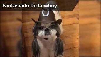 Shitisu Fantasiado De Cowboy, Que Coisinha Mais Lindinha Meu Deus!
