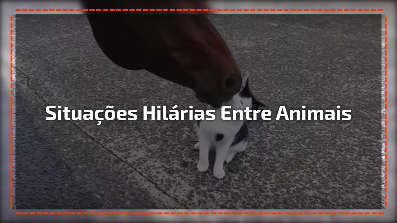 Situações hilárias entre animais