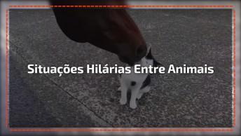 Situações Hilarias Entre Os Animais, Olha Só Estas Fofuras!