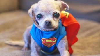 Steve Greig Adota Todos Animais Que Tem Menos Chance De Ser Adotados, Confira!