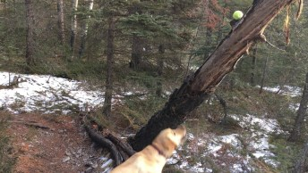 Subindo Em Árvore Para Poder Pegar Bolinha, Olha Só Que Amiguinho Esperto!