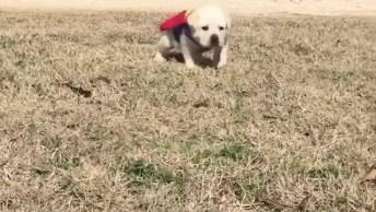 Super Cães Em Ação, Olha Só Que Coisinha Mais Lindinha Este Super Herói!