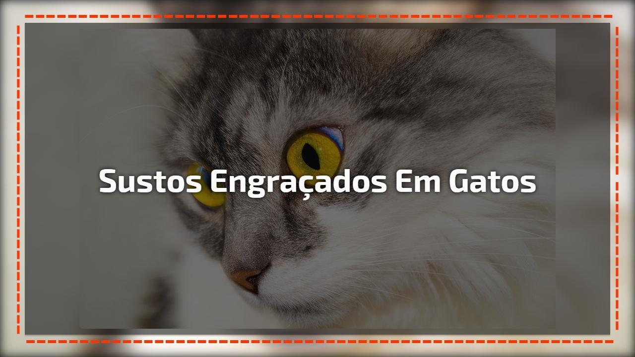 Sustos de gatos mais engraçados registrados em videos, você vai rir muito!