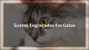 Sustos De Gatos Mais Engraçados Registrados Em Vídeos, Você Vai Rir Muito!
