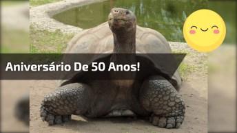 Tartaruga Comemorando 50 Anos, Com Direito Até A Frutinha Em Formato De Bolo!