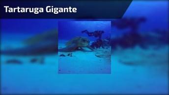 Tartaruga Gigante, Ela É Maior Que As Pessoas Que Estão Por Perto!