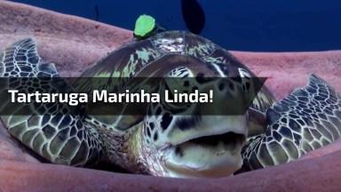 Tartaruga Marinha Com Soninho No Fundo Do Mar, Olha Só A Carinha Dela!