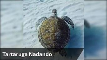 Tartaruga Nadando No Fundo Do Mar! Veja Que Tranquilidade!