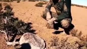Tartaruga Quase Morre Por Falta D'Água, Mas Um Humano Salva Ela!
