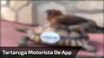 Tartaruga Vira Motorista De Aplicativo, Confira A Cena Engraçada Hahaha!