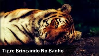 Tigre Brincando No Banho, Veja Que Fofura E Que Lindo Ele É!