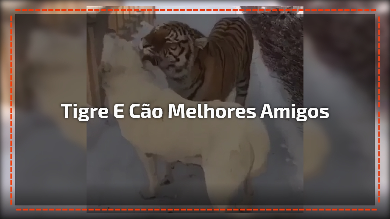 Tigre e cão melhores amigos