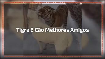 Tigre E Cachorro Melhores Amigos Para Sempre, Olha Só Que Lindos!