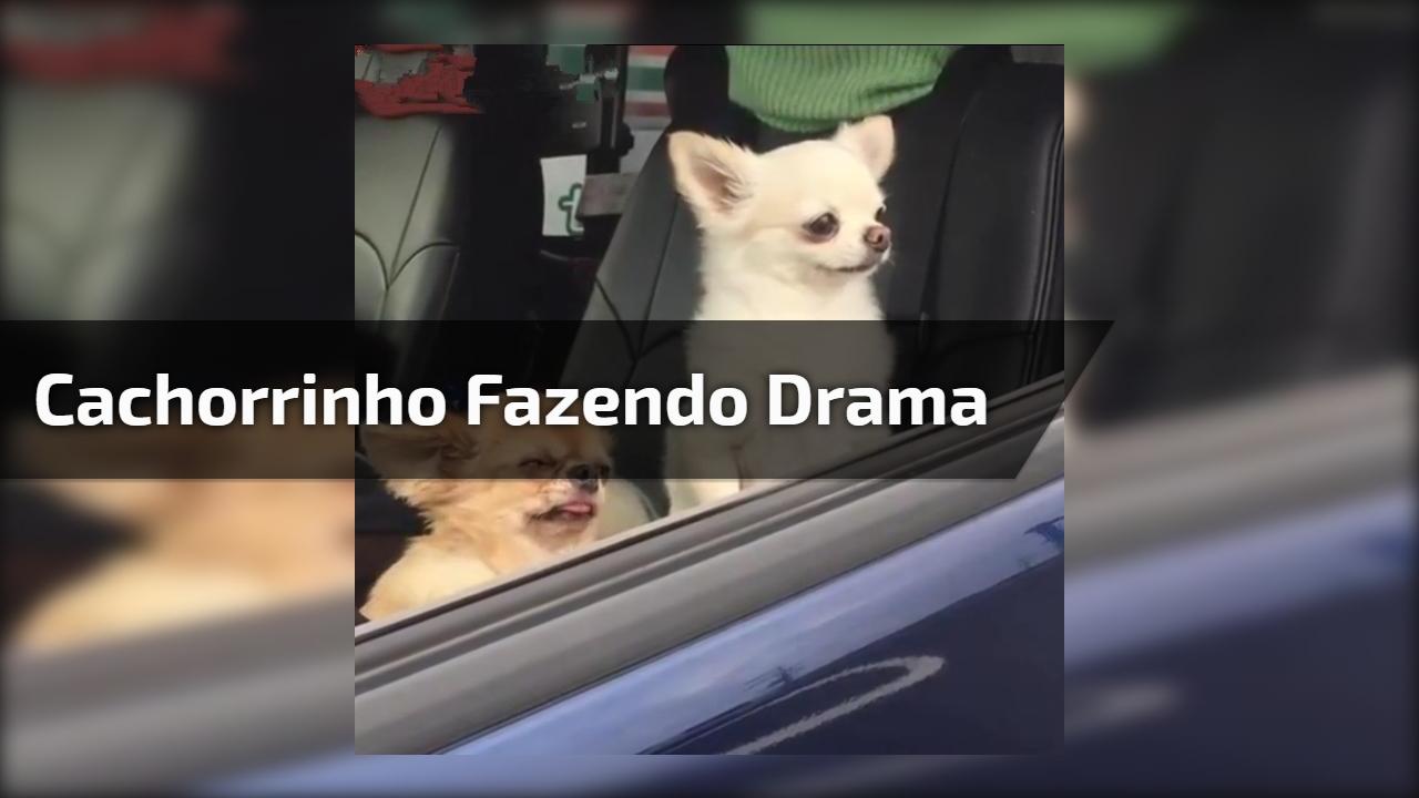 Cachorrinho fazendo drama