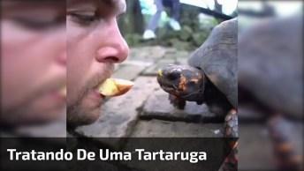 Tratando De Uma Tartaruga Com A Boca, Se Ela Morde Esse Nariz. . .