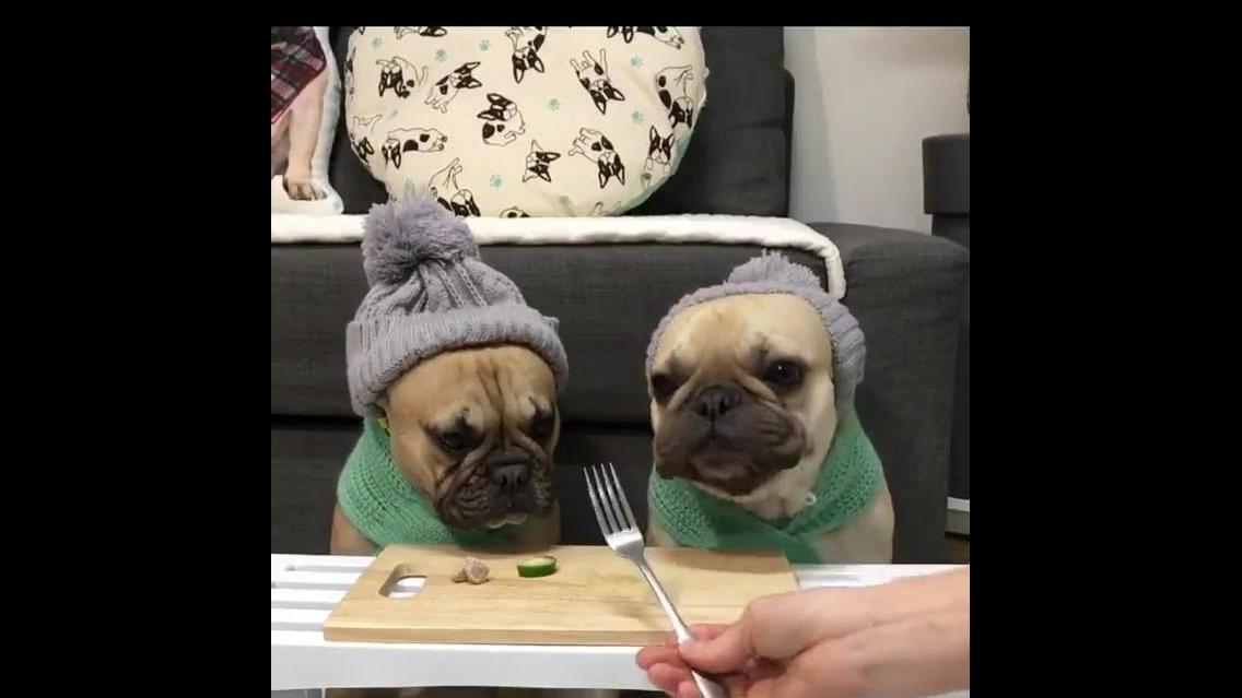 Tratando dos cachorros na horas do almoço