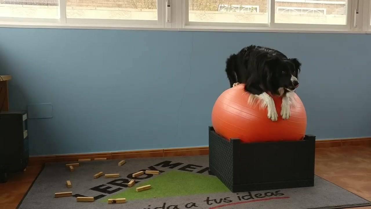 Treinamento de cachorro, veja com esse cão é esperto!