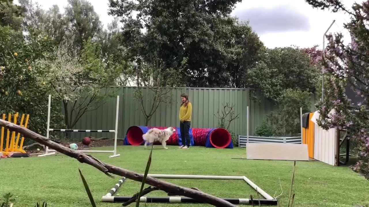 Treinamento de um cachorro