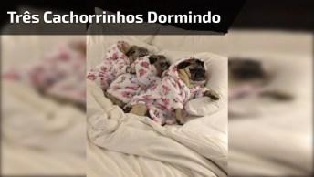 Três Cachorrinhos Dormindo Como Bebês, Que Delicia De Soneca!