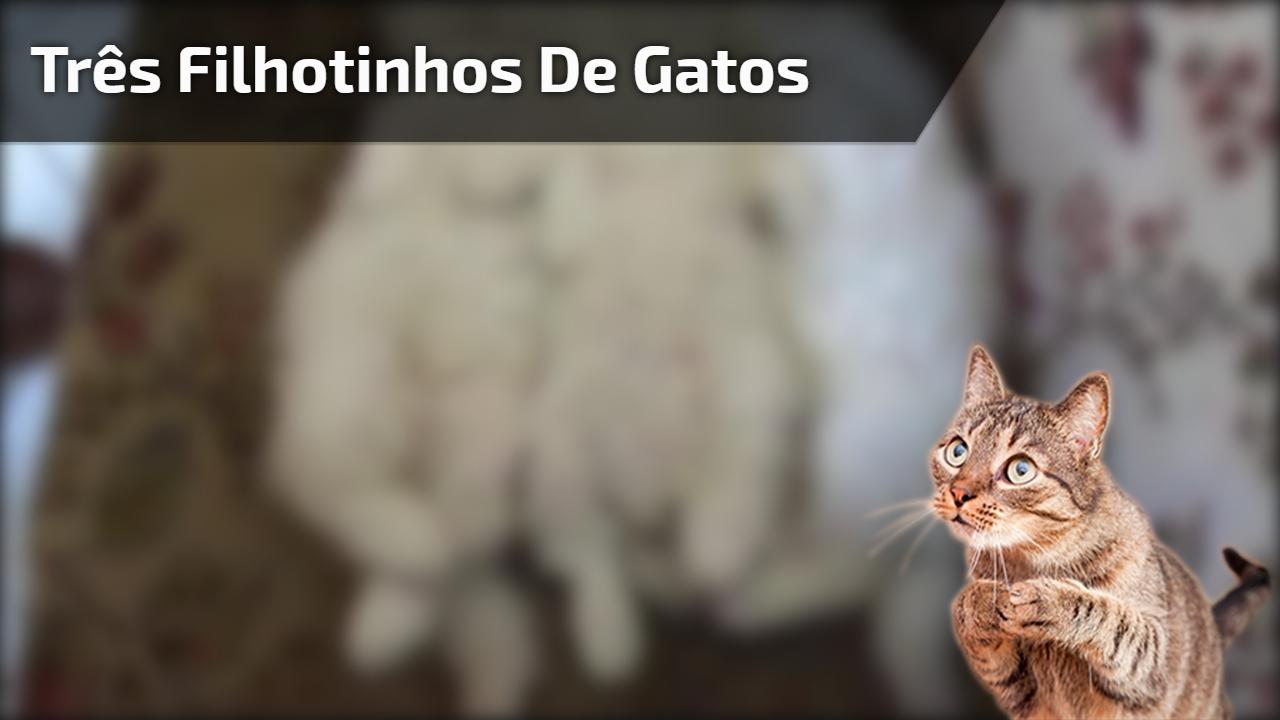 Três filhotinhos de gatos