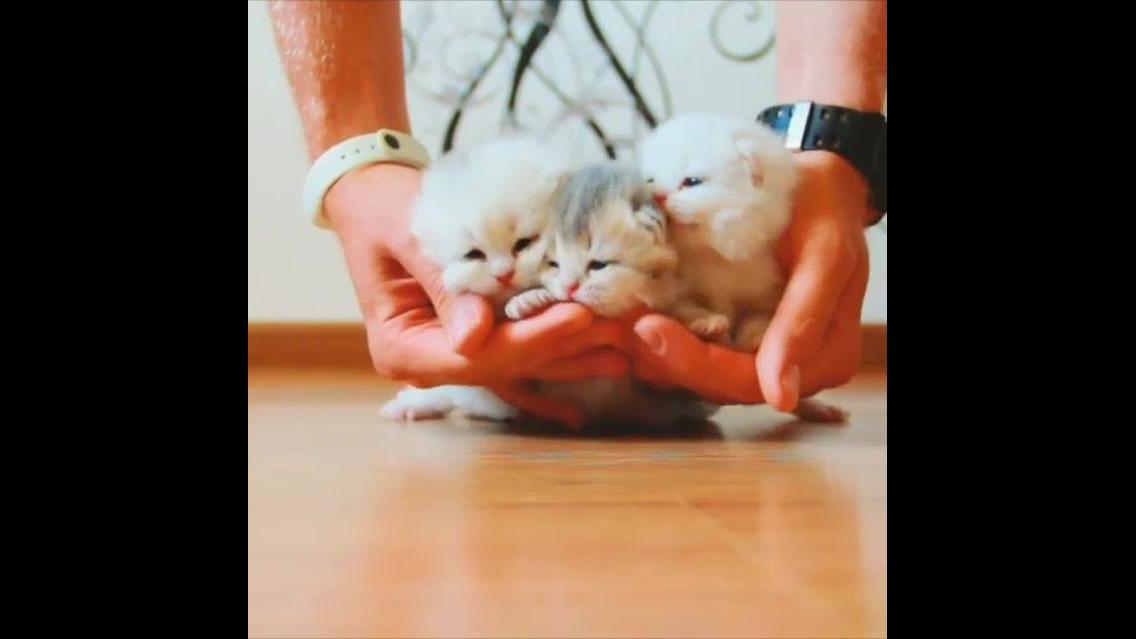 Três filhotinhos de gatos mais fofos que verá hoje